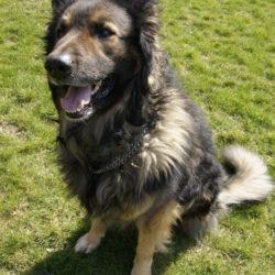 TEDDY – sucht hundeerfahrene Menschen
