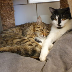 BIBI und TINA – suchen gemeinsames Zuhause