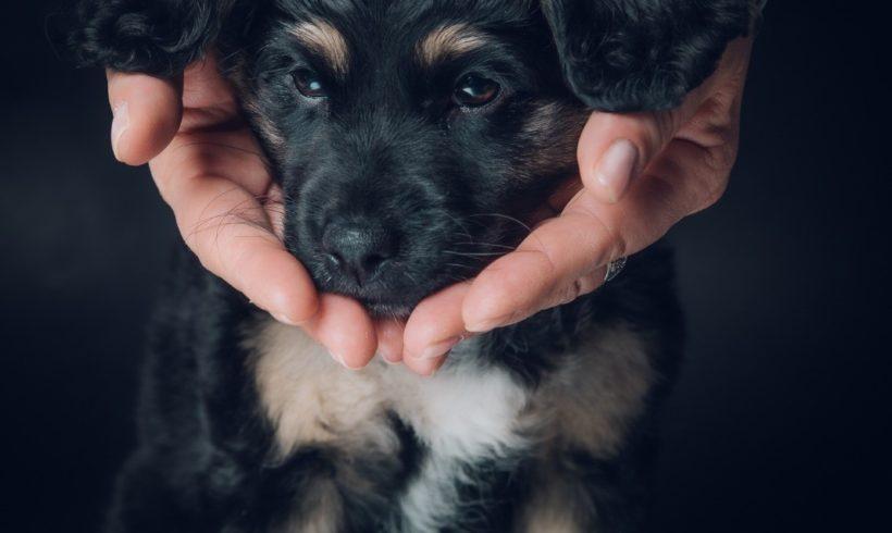 Auszug aus dem Tierschutzgesetz