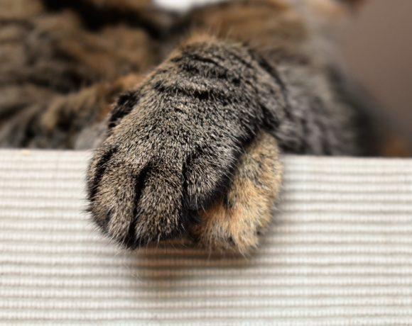 Weitere Katzen warten auf Vermittlung