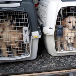 Beschlagnahmung von Tieren