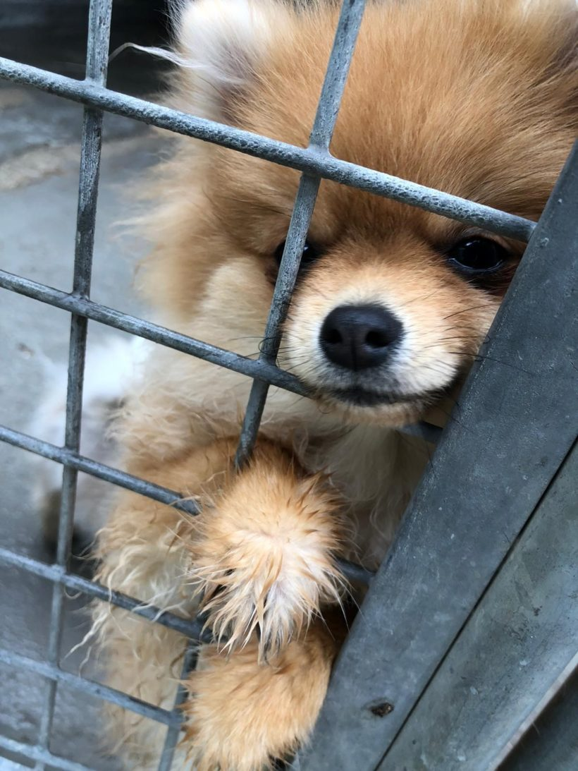 Unschuldig hinter Gittern