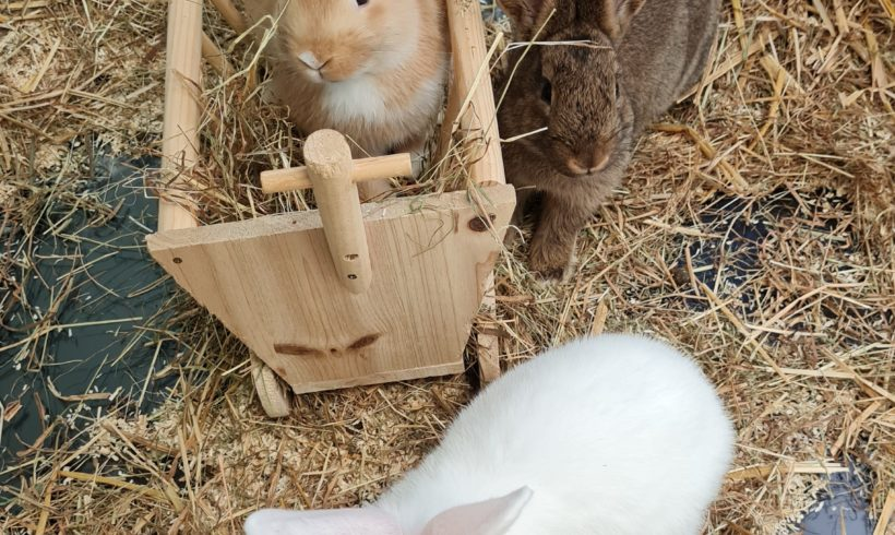 Pumba, Timon und Elsa